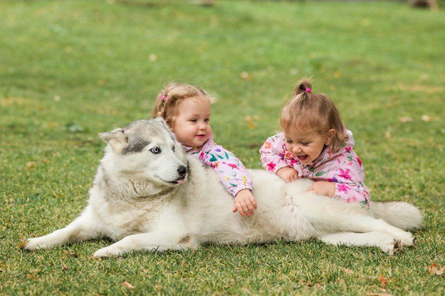 Animais para crianças
